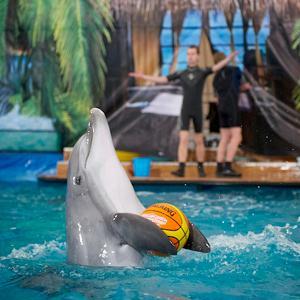 Дельфинарии, океанариумы Касторного