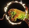 Цирки в Касторном