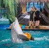 Дельфинарии, океанариумы в Касторном