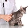 Ветеринарные клиники в Касторном